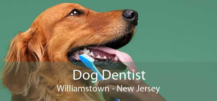 Dog Dentist Williamstown - New Jersey
