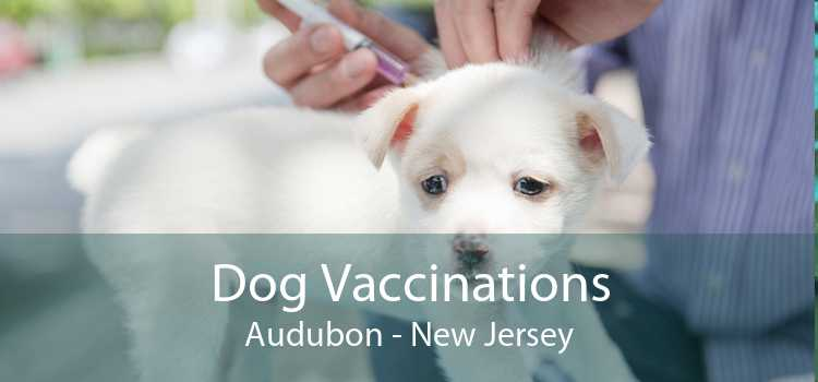 Dog Vaccinations Audubon - New Jersey