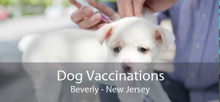 Dog Vaccinations Beverly - New Jersey