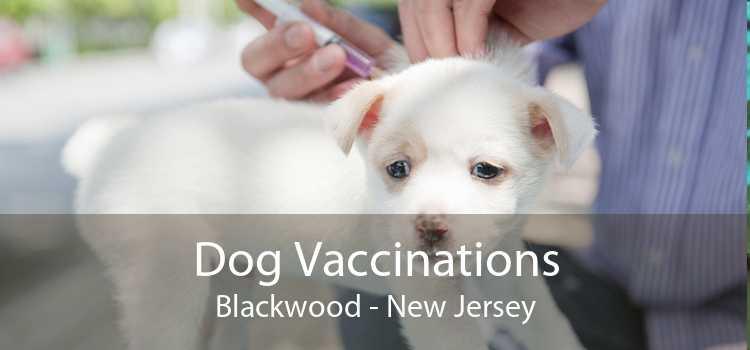 Dog Vaccinations Blackwood - New Jersey