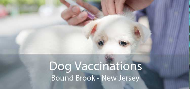 Dog Vaccinations Bound Brook - New Jersey