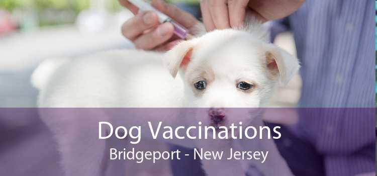 Dog Vaccinations Bridgeport - New Jersey