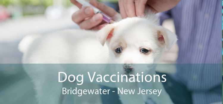 Dog Vaccinations Bridgewater - New Jersey