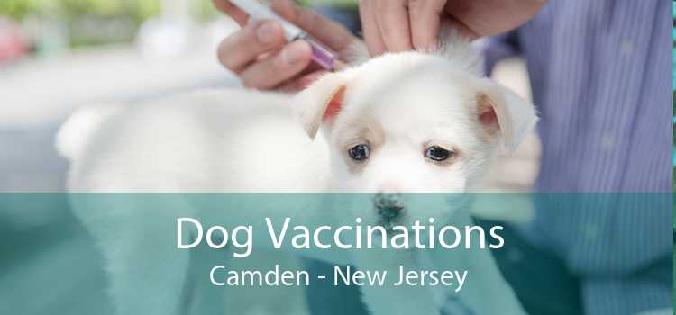 Dog Vaccinations Camden - New Jersey