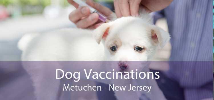 Dog Vaccinations Metuchen - New Jersey