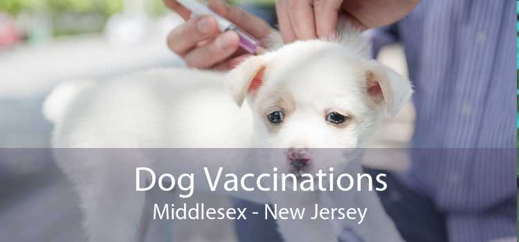 Dog Vaccinations Middlesex - New Jersey