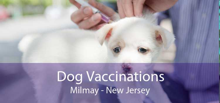 Dog Vaccinations Milmay - New Jersey