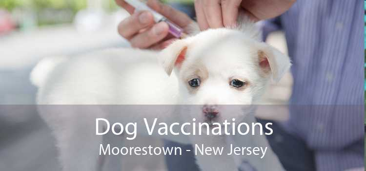 Dog Vaccinations Moorestown - New Jersey