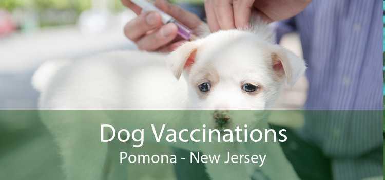 Dog Vaccinations Pomona - New Jersey
