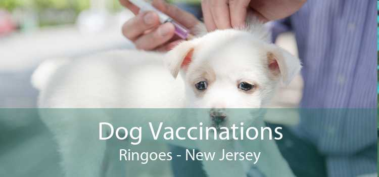 Dog Vaccinations Ringoes - New Jersey