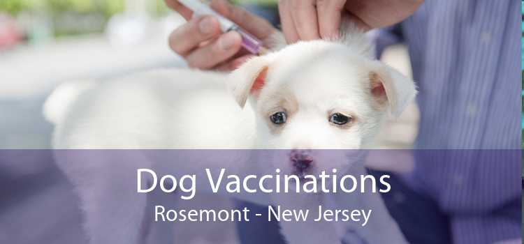 Dog Vaccinations Rosemont - New Jersey