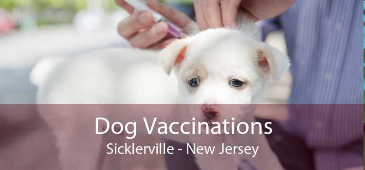 Dog Vaccinations Sicklerville - New Jersey