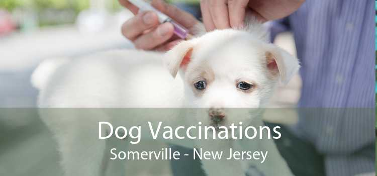 Dog Vaccinations Somerville - New Jersey