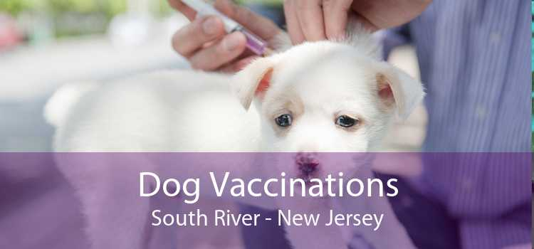 Dog Vaccinations South River - New Jersey