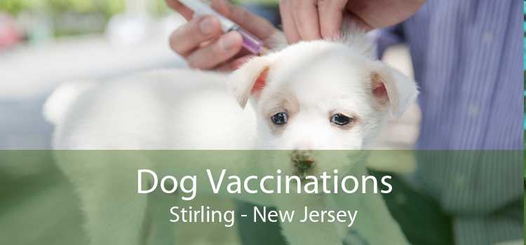 Dog Vaccinations Stirling - New Jersey