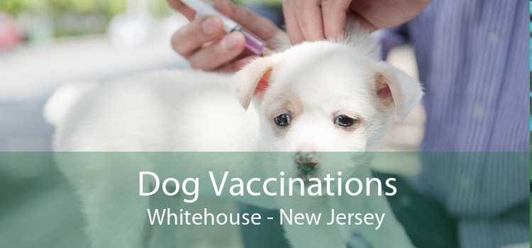 Dog Vaccinations Whitehouse - New Jersey