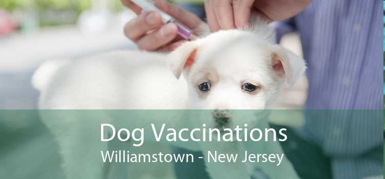 Dog Vaccinations Williamstown - New Jersey