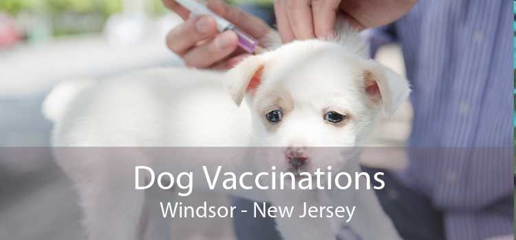 Dog Vaccinations Windsor - New Jersey