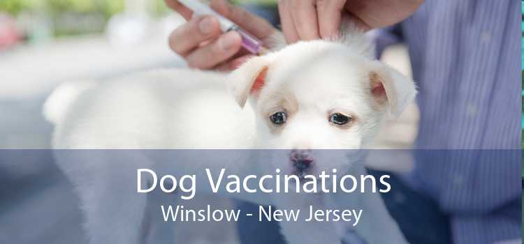 Dog Vaccinations Winslow - New Jersey