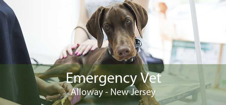Emergency Vet Alloway - New Jersey