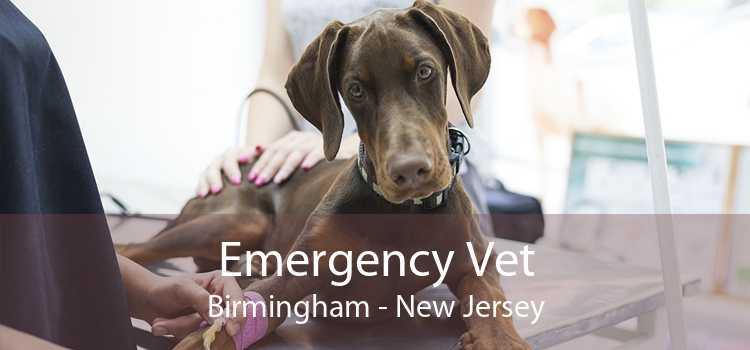 Emergency Vet Birmingham - New Jersey