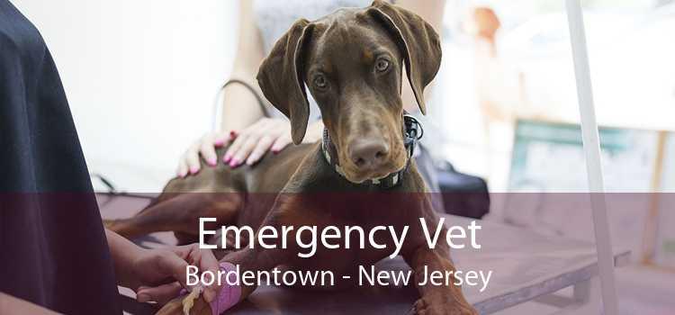 Emergency Vet Bordentown - New Jersey
