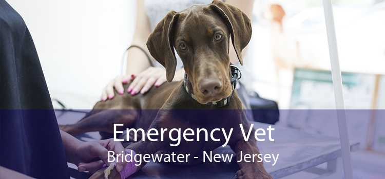 Emergency Vet Bridgewater - New Jersey