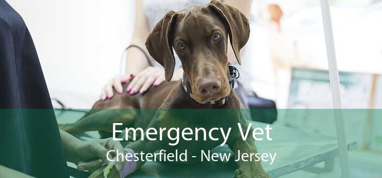 Emergency Vet Chesterfield - New Jersey