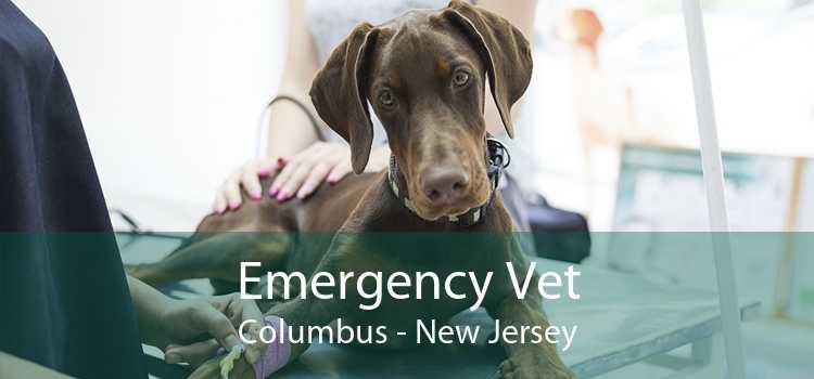 Emergency Vet Columbus - New Jersey