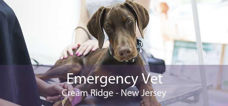 Emergency Vet Cream Ridge - New Jersey