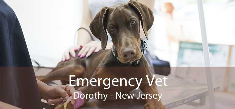 Emergency Vet Dorothy - New Jersey