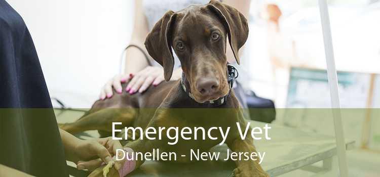 Emergency Vet Dunellen - New Jersey