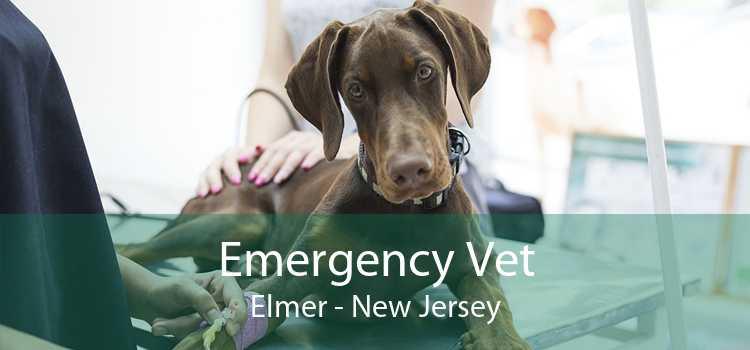 Emergency Vet Elmer - New Jersey