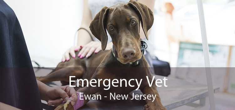 Emergency Vet Ewan - New Jersey