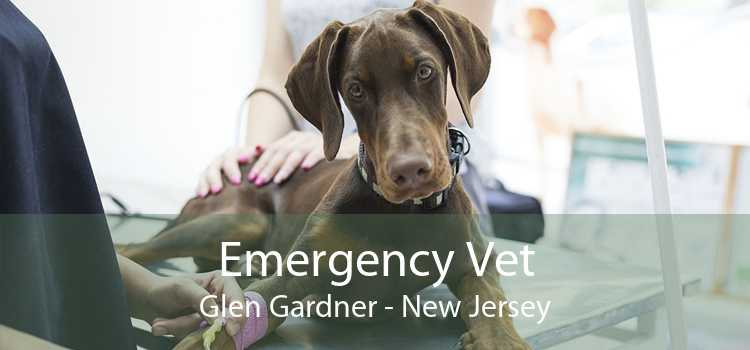Emergency Vet Glen Gardner - New Jersey