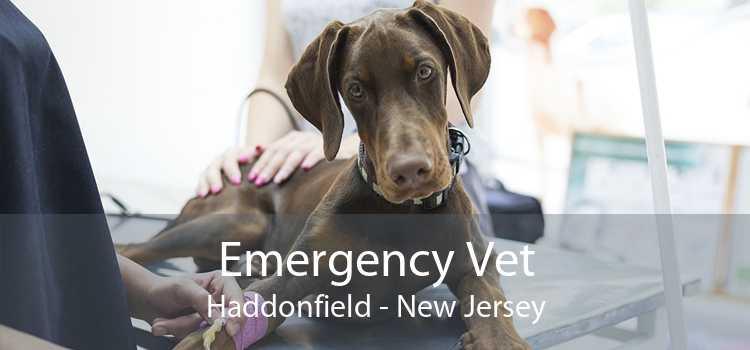 Emergency Vet Haddonfield - New Jersey