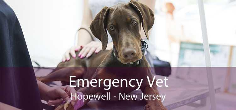 Emergency Vet Hopewell - New Jersey