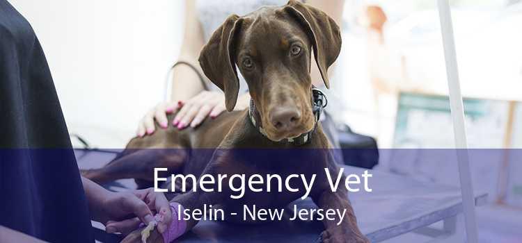 Emergency Vet Iselin - New Jersey