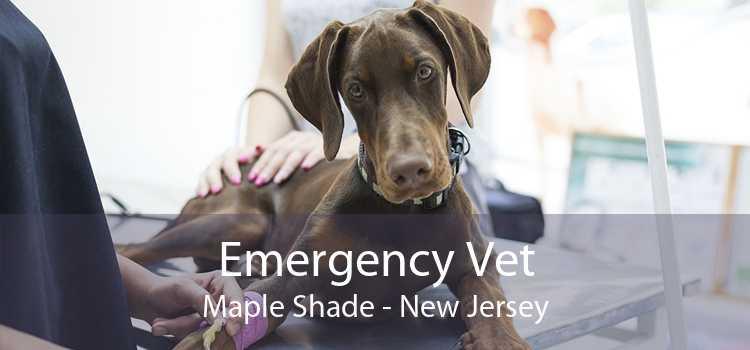 Emergency Vet Maple Shade - New Jersey