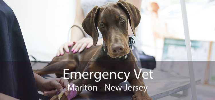 Emergency Vet Marlton - New Jersey