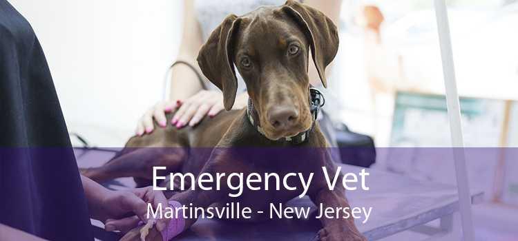 Emergency Vet Martinsville - New Jersey
