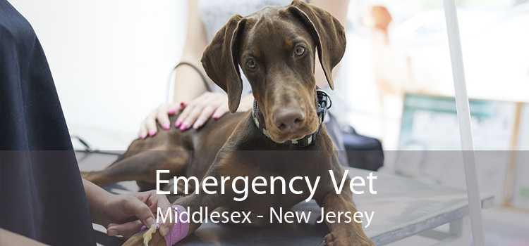 Emergency Vet Middlesex - New Jersey