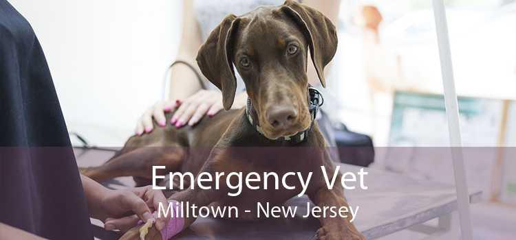 Emergency Vet Milltown - New Jersey