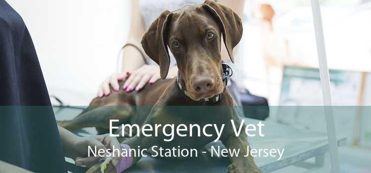 Emergency Vet Neshanic Station - New Jersey