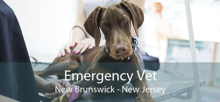 Emergency Vet New Brunswick - New Jersey