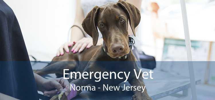 Emergency Vet Norma - New Jersey