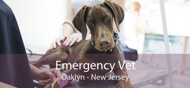Emergency Vet Oaklyn - New Jersey