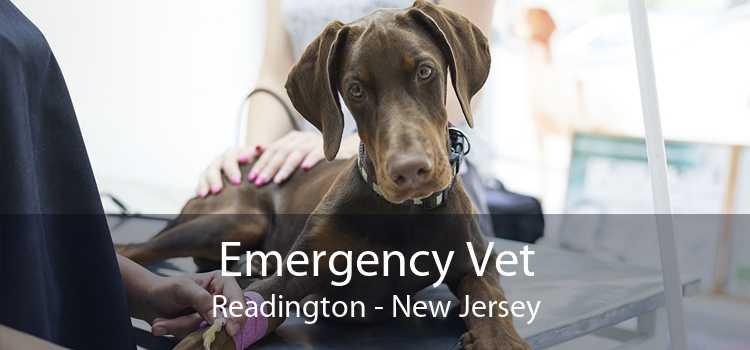 Emergency Vet Readington - New Jersey