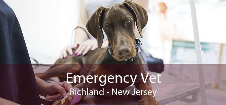 Emergency Vet Richland - New Jersey