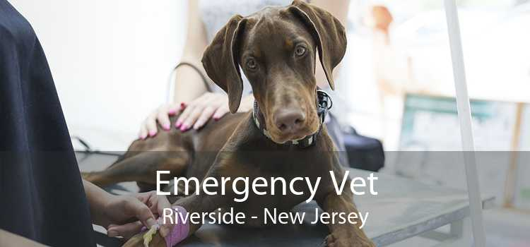 Emergency Vet Riverside - New Jersey